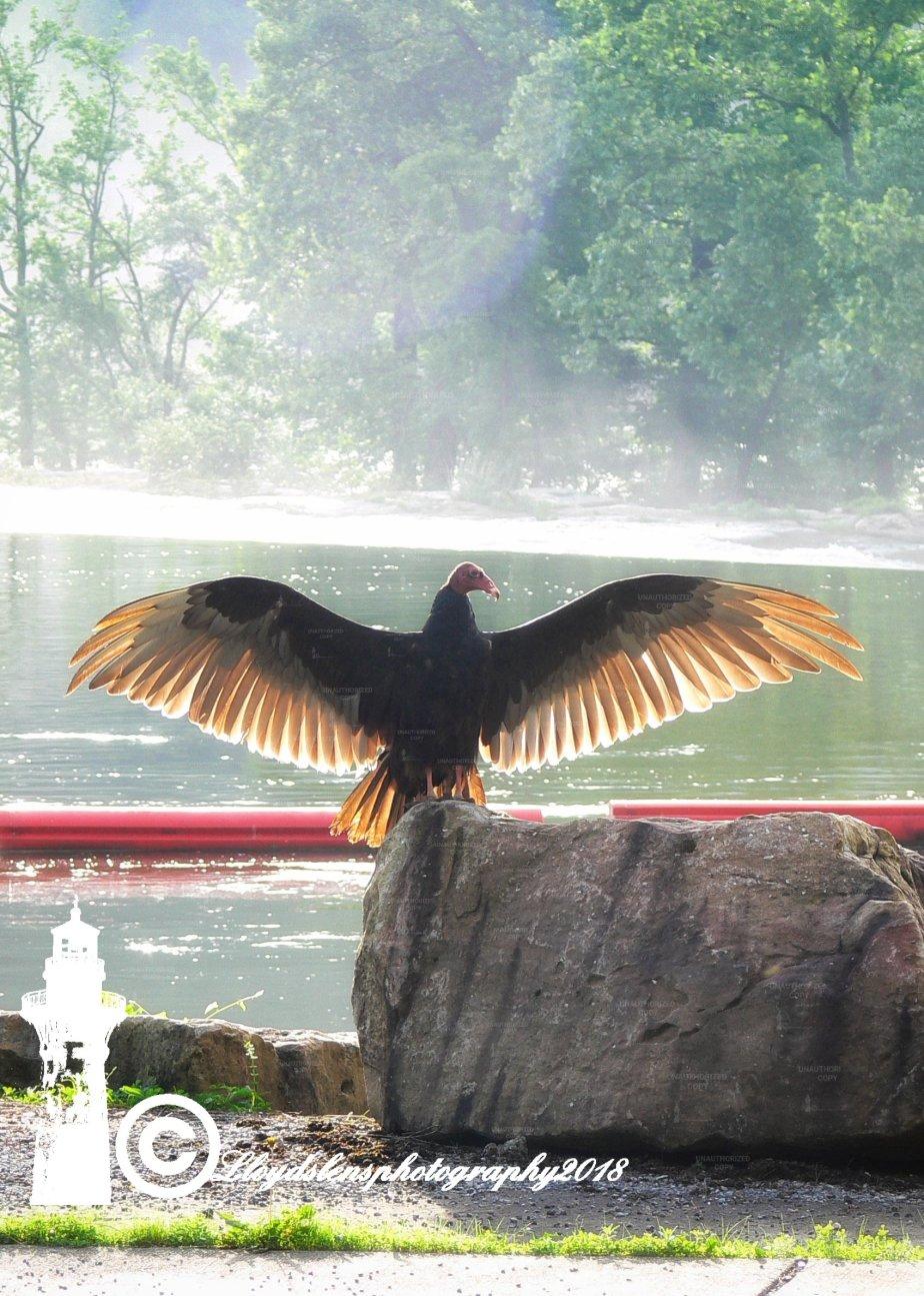 The Dirty Birdie