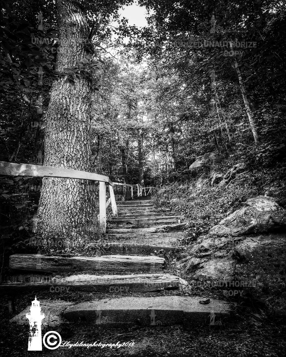 Lovers leap trail at hawks nest state park in ansted west virginia black and white photography