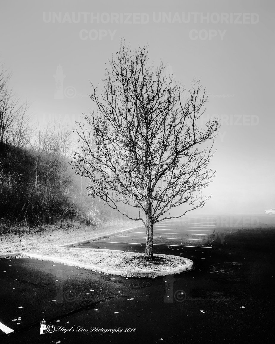 Suspended In TheMists