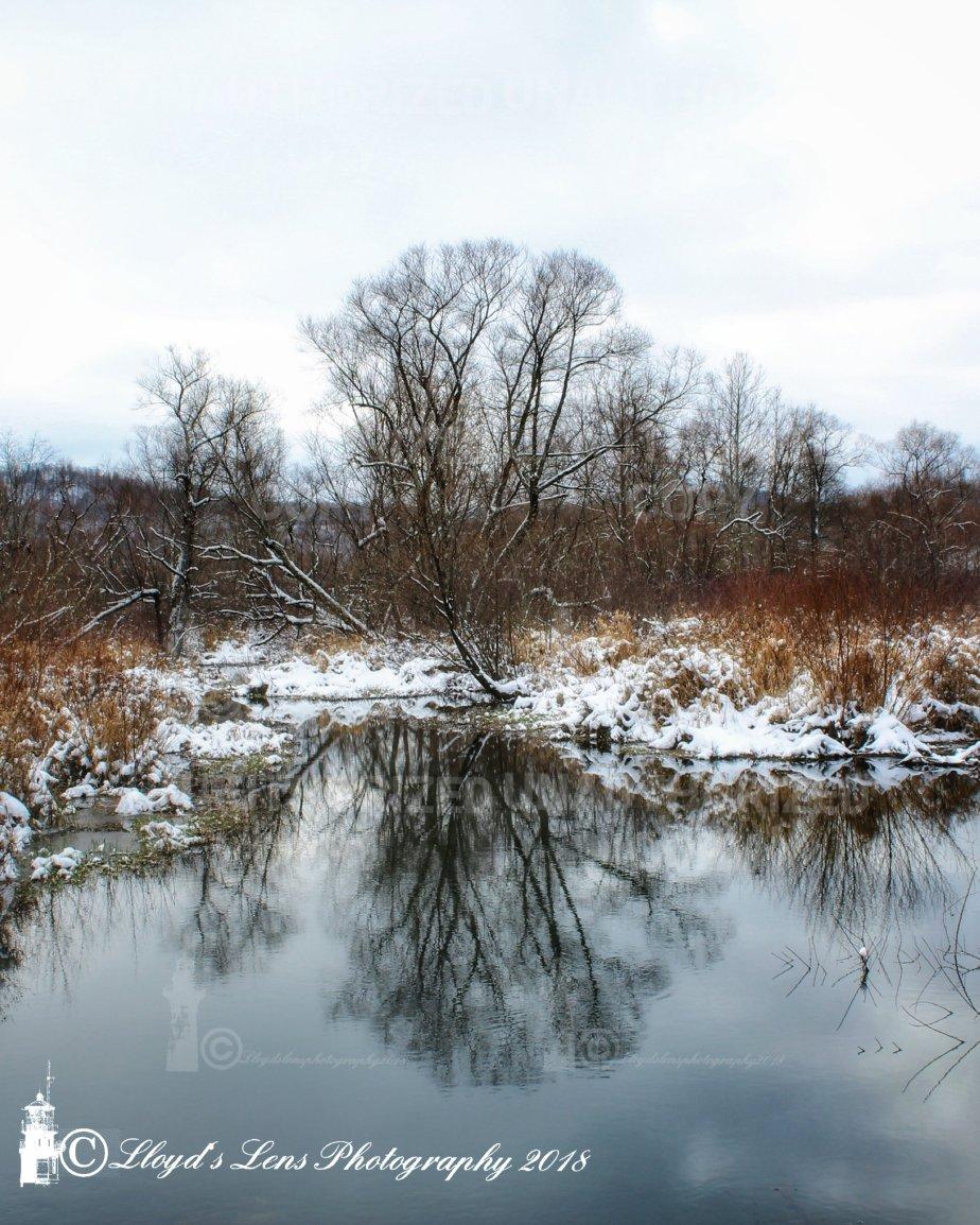 The Winter World