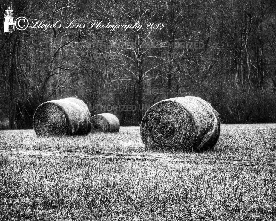 Memories Of The Hay Fields