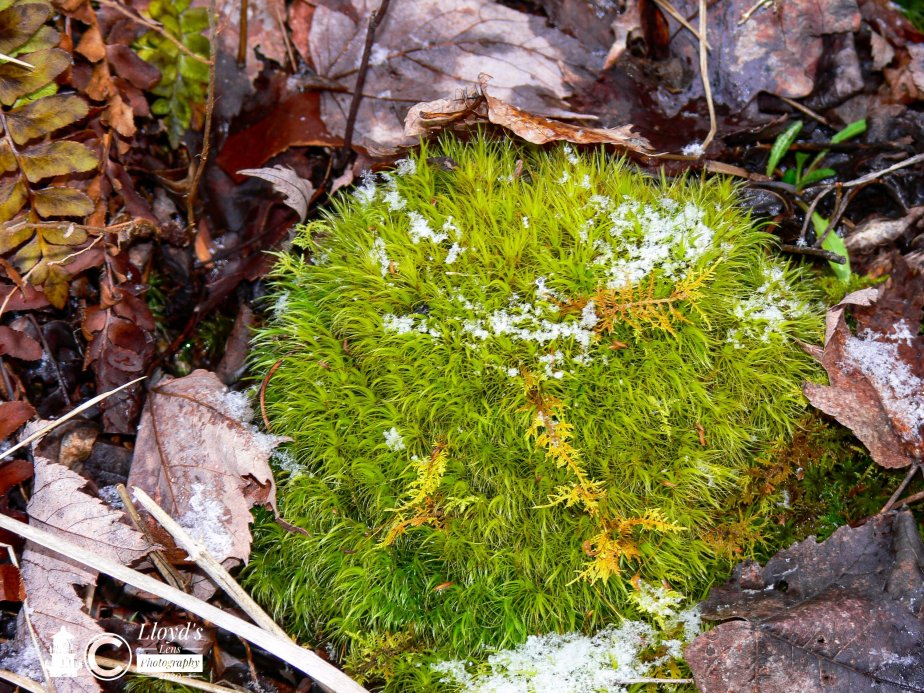 Forage Friday #45 Moss