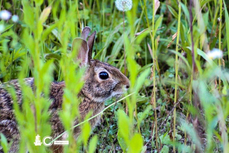 A Rabbit On TheRun