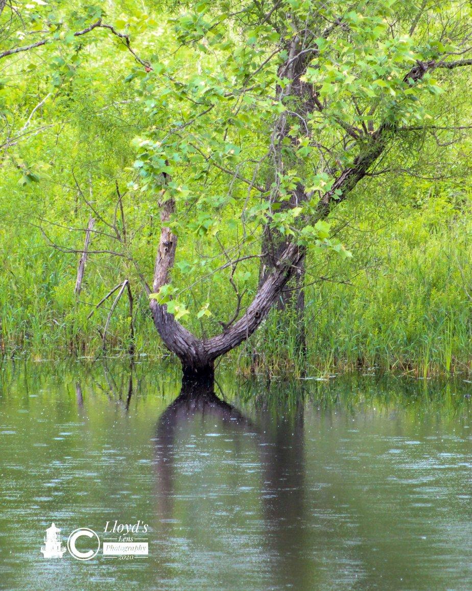 The Pond King … A FishyTale.