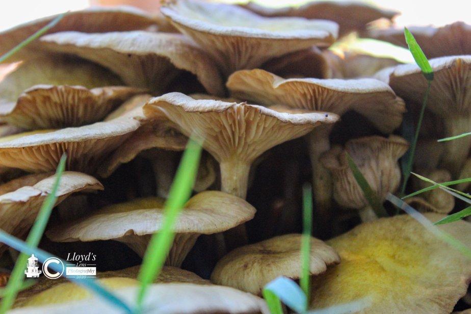 Forage Friday #76 The MushroomDilemma