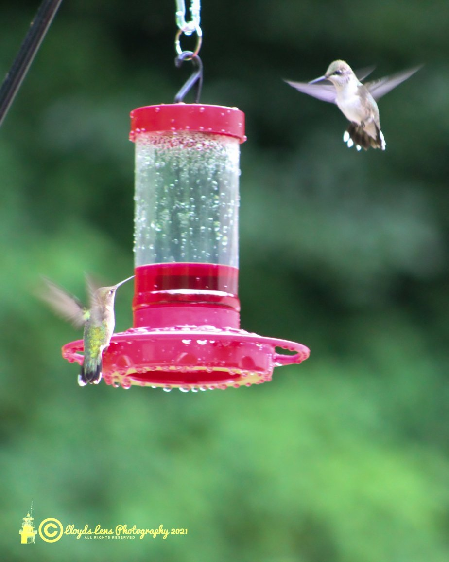 Dueling Hummingbirds & A Tip On What To Do AboutIt