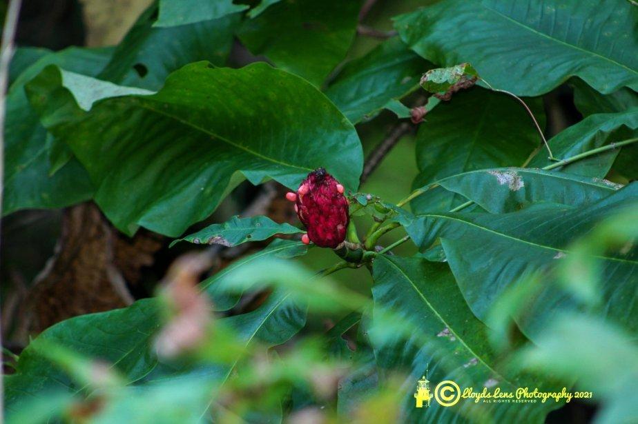 Magnolia Berries InFall