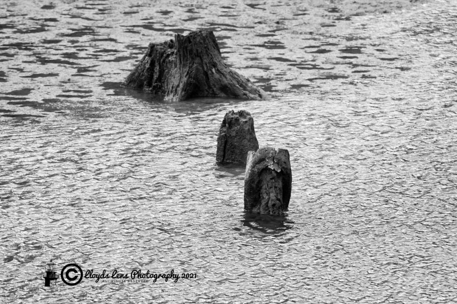 A Vist To Ghost Forest At SalmonRun